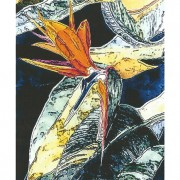 Bird 5x7 Note Card